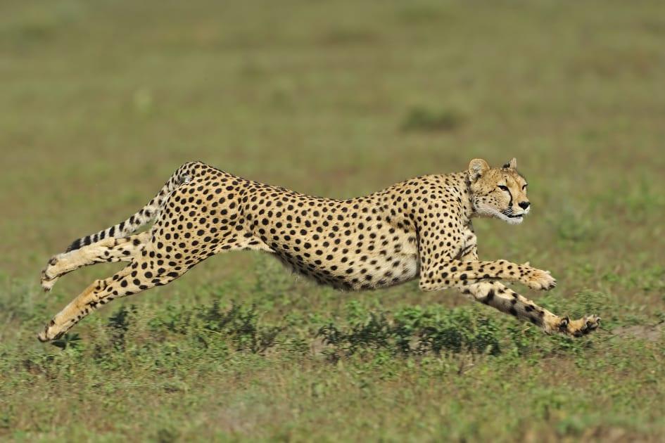 Soft robots can now run like cheetahs and swim like marlins
