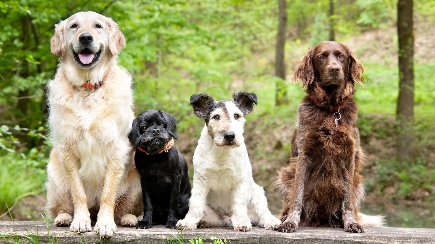 National Dog Day : let celebrate the dogs in our lives and families